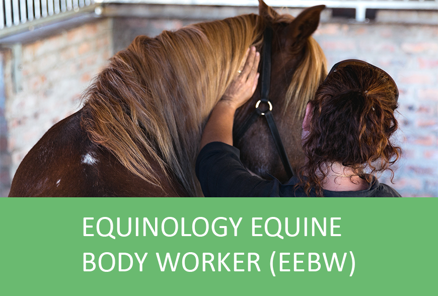 Equinology Equine Body Worker (EEBW) Certification Course: EQ100SA ...
